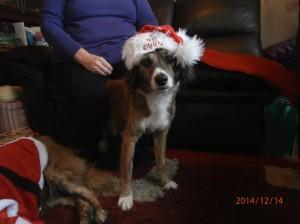 tara's merry christmas